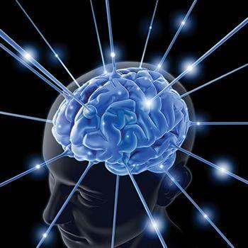 telesna inteligenca in naši možgani